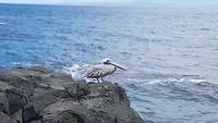 Galapagos  deel 2