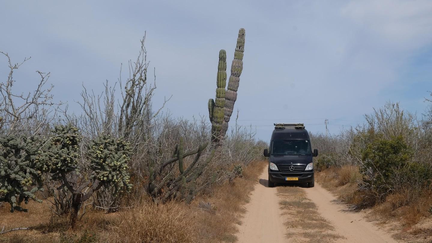 California Baja