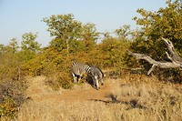 We hebben meer olifanten dan zebra's gezien.