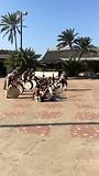 Zulu dansers