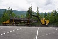 Vervoer van bomen.