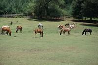Pony's (Speciaal voor Roos :-) )