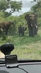Ze blijven leuk, olifanten :-)