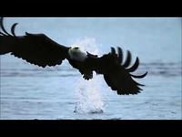 Fly Like An Eagle ~ Steve Miller Band { Music Video &  Lyrics } HD