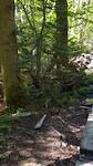 In het mooie bos vd wolf...