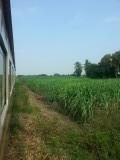 De treinreis van Bangkok naar kancharaburi