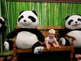 Boefje tussen de pandaberen