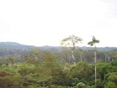 8. Amazone