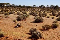 Het landschap op zo'n 100 km van Port Augusta
