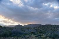 De zonsondergang geeft paarse accenten aan de struiken (3)