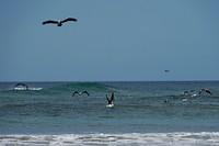 De pelikanen hadden het druk met vissen