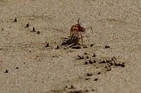 Geinige krabbetjes op Playa Grande
