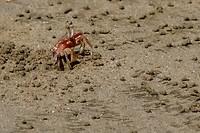 Geinige krabbetjes op Playa Grande (2)