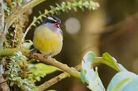 Volgens mij heeft de kleine kiskadie model gestaan voor 'angry birds'