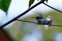 Deze kolibri steeg net op