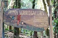 Veel soorten kolibries te zien bij de Hummingbird Gallery