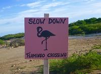 Overstekende flamingo's