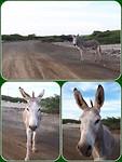 Nieuwsgierige ezel