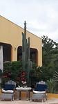 Kletsende loro's bovenop de cactus