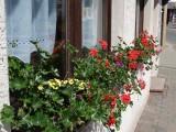 Bijna ieder vensterbank hangt vol met bloemen