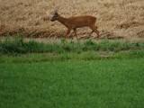 Aahhhh Bambi