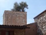 Olijfboompje op toren