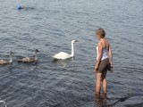 Pootje baden samen met de zwanen