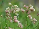 prachtige bloemen, overal langs de weg