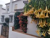 Bloemenpracht in San Martin