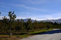 De boomgaard van Wild Earth Wines