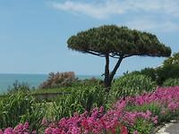prachtige boom en uitzicht op de Gironde