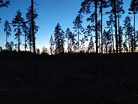 horizon foto in het bos