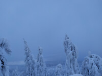 Sneeuwige bomen Säfsen