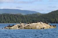 Zeehonden op een rots in de sounds