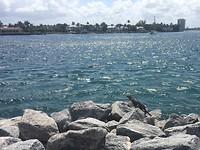 Leguaan in Palm Beach