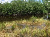 Dag 2 - Everglades (3)