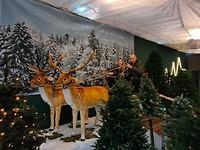 23 december - In het tuincentrum