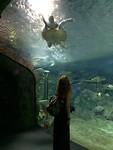 Bij de zeeschildpadden