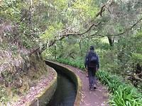 Bemoste bomen in het Folhadal