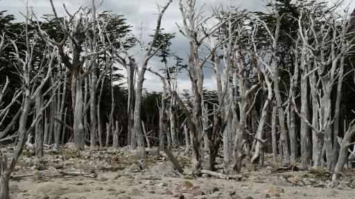 dood bos