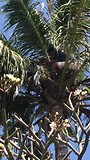 Kom uit die palmboom