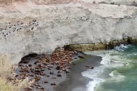 De zeeleeuwen-colonie