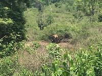 Olifant onderweg gespot