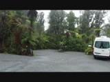 Regen in het Rainforest in Frans Jozef