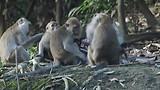 Video groepje aapjes in het wild