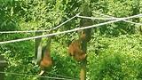 Lekker spelen en leren in de touwen te hangen