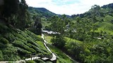 Boh theeplantage in Cameron Highlands