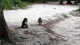 Zo zijn apen ook