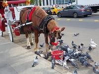 Paarden bij Central Park