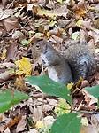 Eekhoorn in Central Park